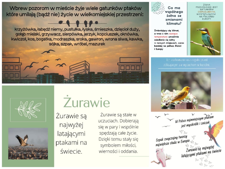 Międzynarodowy Dzień Ptaków 2021