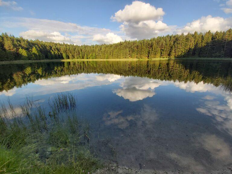 Retencja wodna - las jest doskonałym miejscem do magazynowania wody